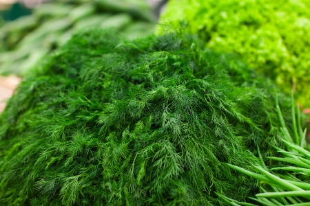 fresh green fennel in box in supermarket Stock Photo - 16812129