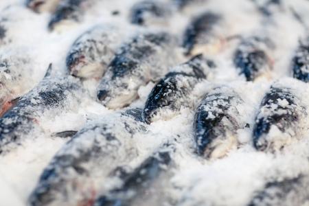 Fresh fish on ice Stock Photo - 17952539
