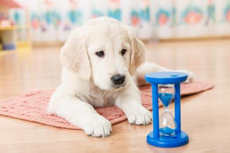 ラブラドールレトリバーの子犬の砂時計を見て