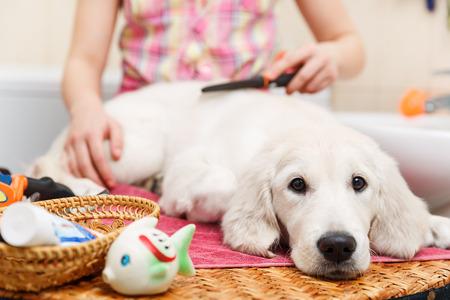 Meisje eigenaar is het uitkammen van de vacht van de retriever pup na het douchen