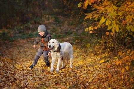 niños jugando en el parque: El pequeño niño caminando con un golden retriever en el parque del otoño Foto de archivo