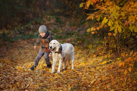 dog park: Little boy walking with a golden retriever  in autumn park Stock Photo
