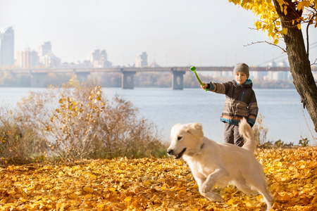 canine: Little boy playing with a golden retriever in autumn park