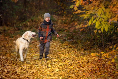leading education: Little boy walking with a golden retriever in autumn park