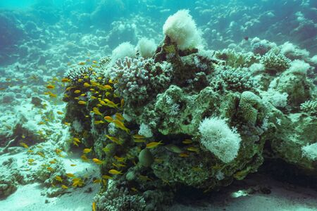 Underwater coral reef landscape background in the deep blue sea with colorful fish and marine life