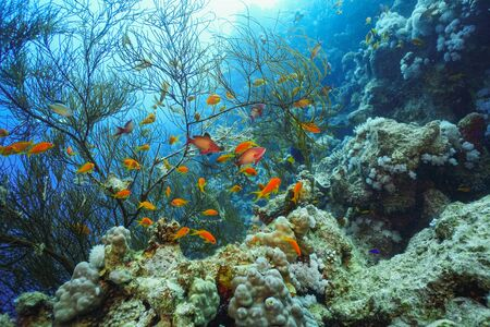 underwater coral reef landscape background in the deep blue sea with colorful fish and marine life Imagens