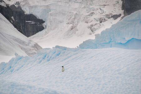 Gentoo Penguin alone on iceberg in Antarctica, scenic frozen landscape with blue ice and snowfall, Antarctic Peninsula 免版税图像
