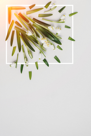 Creative layout made with snowdrop flowers on a bright background with white frame. Spring minimal concept. Flat lay, top view, copy space.