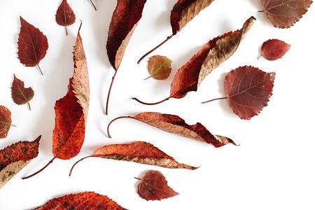 Autumn composition. Pattern from dried leaves on white background. Autumn, fall, thanksgiving day concept. Creative Flat lay, top view, copy space