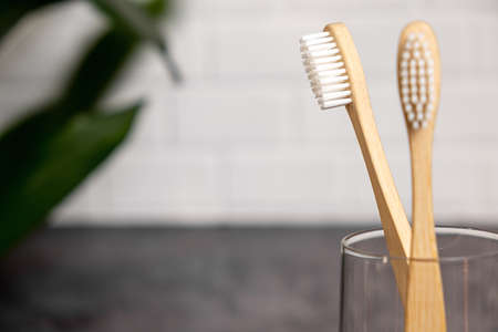 Two eco natural bamboo toothbrushes and green leaf. Sustainable lifestyle and zero waste home. Dental care and Eco friendly and reuse concept. Copy space