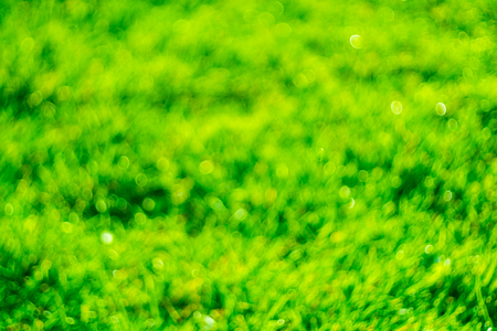 Green background. Background for the desktop. Texture. Green texture for wallpaper. Grass in the meadow.