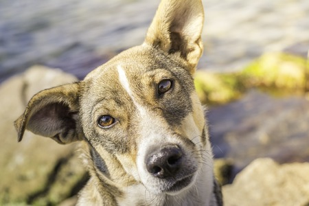 Portrait of a dog with intelligent eyes. A dog on the rocks by the sea. A curious dog. Homeless dog.