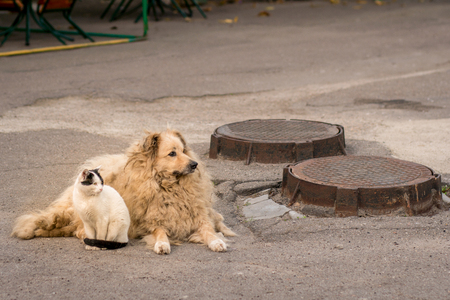 Homeless animals. Stray cat and dog. Friendship between a dog and a cat. Abandoned pets. Street animals.