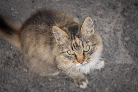 Fluffy cat. The cat is sitting on the road. Beautiful picture of a cat. Pathetic lonely cat. Home pets. Stock fotó