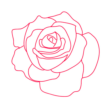Drawing a red rose on a white background