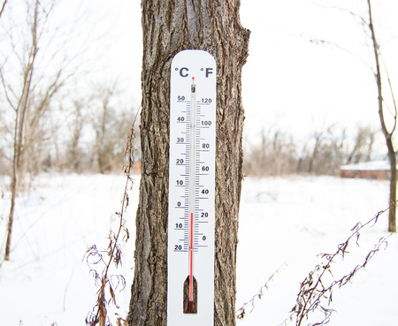 Thermometer hanging on the tree photo