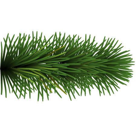Branch of Christmas tree Illustration