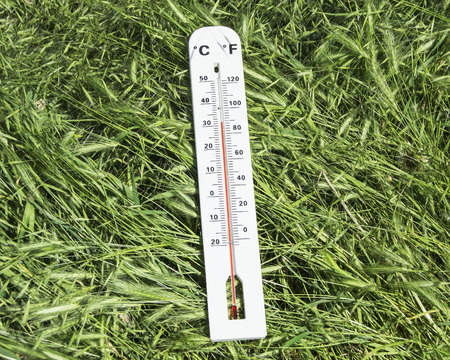 thermometer on green grass Stock Photo - 28526128