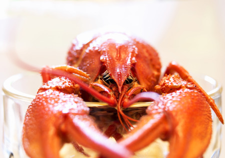 Boiled lobster closeup Stock Photo
