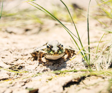 frog in nature Stock Photo
