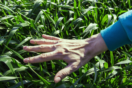 the nature of the hand on the grass Stock Photo