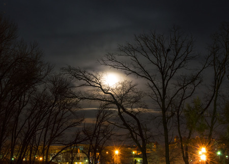 moon in the trees Stock Photo
