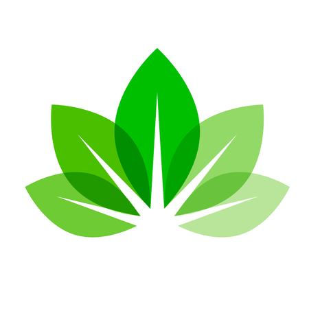 biography: leaves vector icon