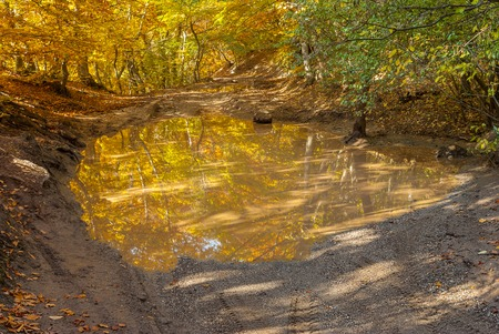 road autumnal: Pool on a country road in autumnal forest