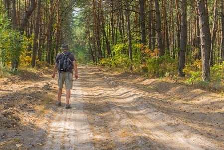 blinders: Lonely hiker walking on sandy road in coniferous forest at fall season Stock Photo