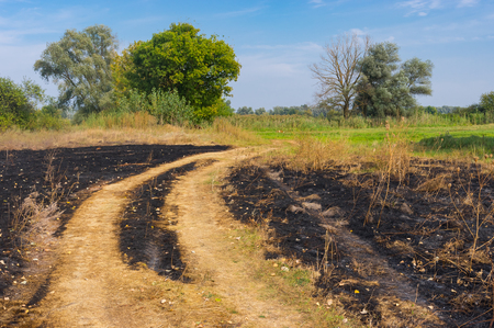 earth road: Rural landscape with burnt herbs and earth road