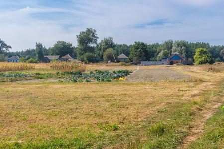 garden settlement: Autumnal landscape with small village Mala Rublivka in Poltavskaya oblast, Ukraine
