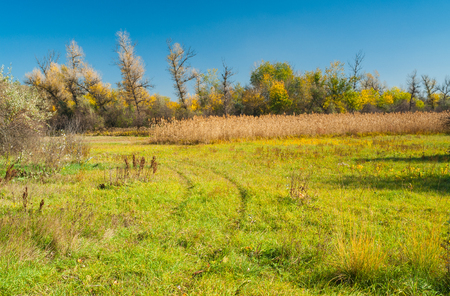 rushy: Landscape with autumnal meadow in central Ukraine