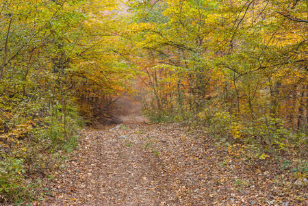 earth road: Earth road in Crimean forest at fall season