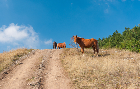 annexed: Horses on a mountain pasture Demerdzhi, Crimean peninsula Stock Photo
