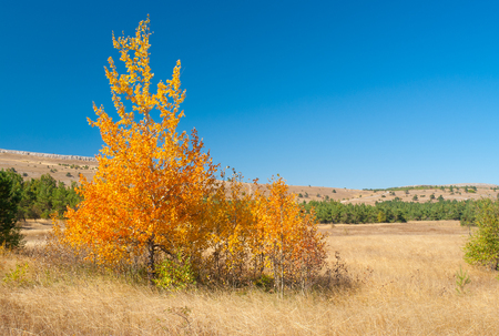 tableland: Beautiful autumnal landscape with family birch on Ai-Petri mountain tableland in Crimean peninsula