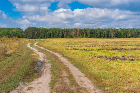 earth road: Ukrainian country landscape with earth road to forest at late summer Archivio Fotografico