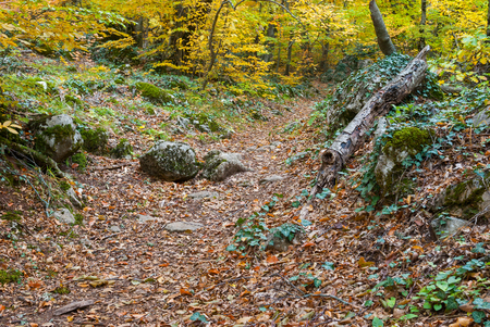crimean: Path in Crimean forest at autumnal season Stock Photo