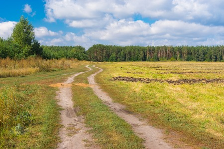 scene season: Country landscape with earth road to forest at late summer