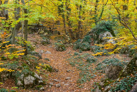 fulvous: Path in mysterious Crimean forest at autumnal season