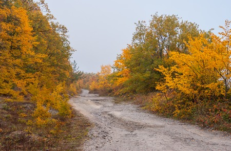 fulvous: Empty mountain road at autumnal season in Crimean peninsula