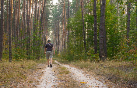 blinders: Lonely hiker on an earth road to evening pine forest Stock Photo