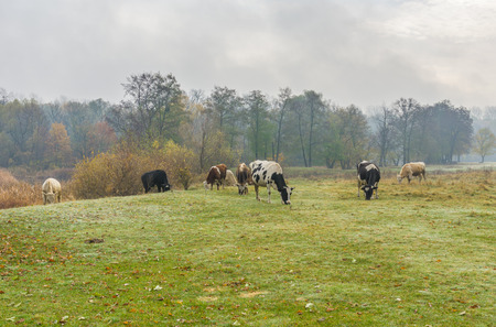 humid: Humid morning on an autumnal pasture