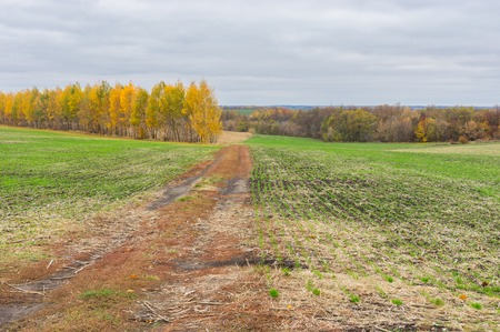 earth road: Earth road between winter crops fields in Central Ukraine at fall season.