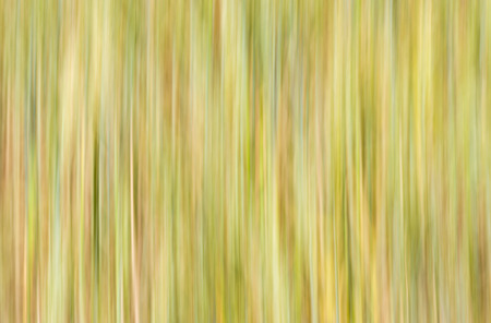 lineas verticales: Natural de fondo - líneas verticales en tonos trigo presentado
