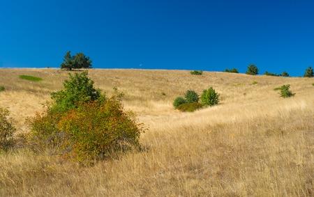 tableland: Autumnal landscape with rosa canina(dog-rose) shrubs on Ai-Petri mountain tableland in Crimean peninsula
