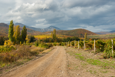 earth road: Mountain landscape with earth road among vineyards in Crimean peninsula Stock Photo
