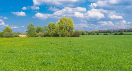 landscape with water-meadow at spring season in central Ukraine