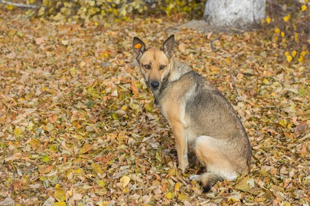 castaway: Outdoor portrait of cute stray female dog sitting in an autumnal park