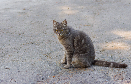 discreet: Outdoor portrait of guarded city cat