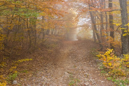 road autumnal: Earth road in Crimean forest at misty autumnal day Stock Photo